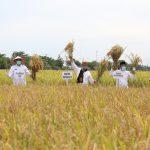 Plt Gubernur Nova Bersama Mentan SYL Panen Raya di Aceh Besar