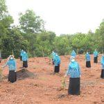 Ketua TP-PKK Aceh Penghijauan Lingkungan UPTD BPSR Blang Bintang