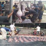 Rayakan Idul Adha 1442 H, Yayasan Udep Saree Simeulue Sembelih 4 Ekor Sapi dan 5 Ekor Kambing