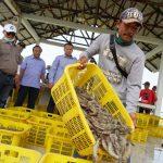 Pandemi Covid-19, Estimasi Panen Perikanan Budidaya Capai 450 Ribu Ton Sepanjang April Hingga Juni 2020