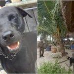 Bunuh Anjing Demi Wisata Halal, Dunia Internasional Kecam Aceh